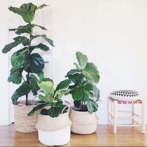 Beautifying your interior design with plants