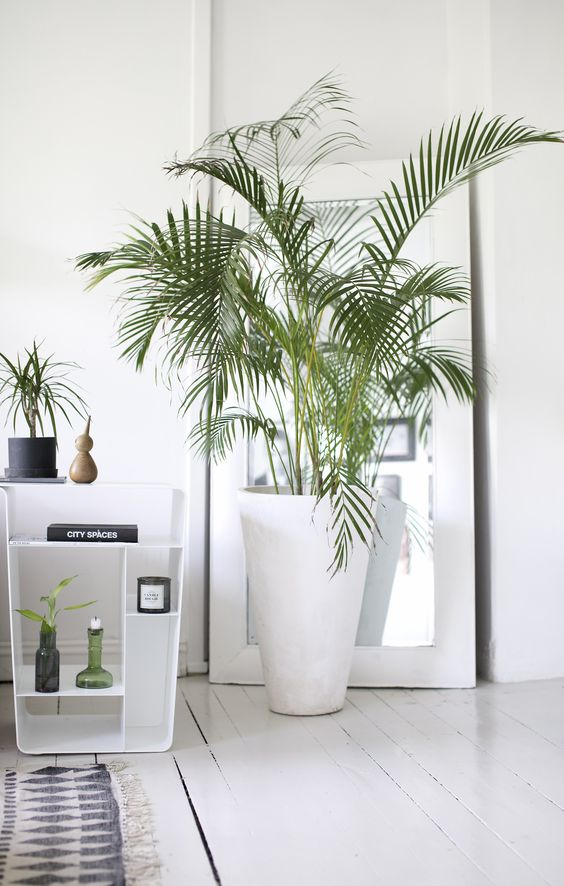 interior design plants
